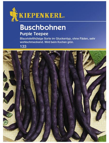 KIEPENKERL Buschbohne vulgaris var. nanus Phaseolus »Purple Teepee«
