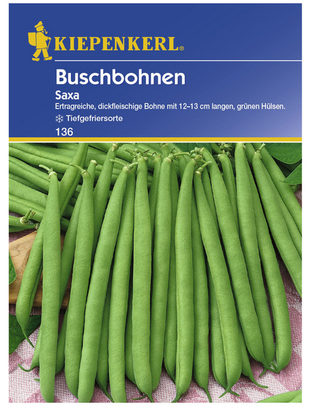 KIEPENKERL Buschbohne vulgaris var. nanus Phaseolus »Saxa«