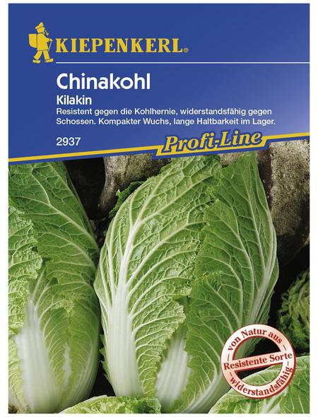 KIEPENKERL Chinakohl rapa subsp. pekinensis Brassica