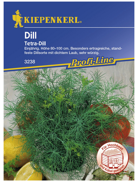 KIEPENKERL Dill Anethum graveolens var. hortorum »Tetra«