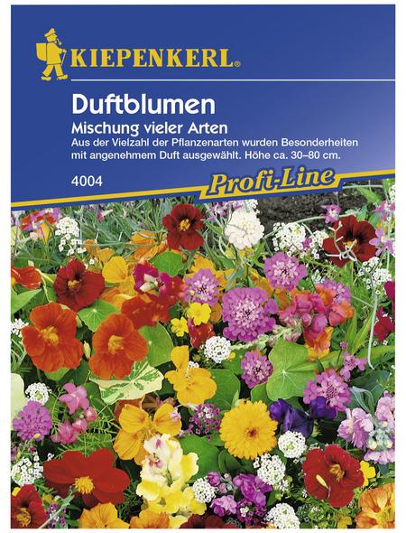 KIEPENKERL Duftblumenmix Einjährig, Samen, Blüte: mehrfarbig