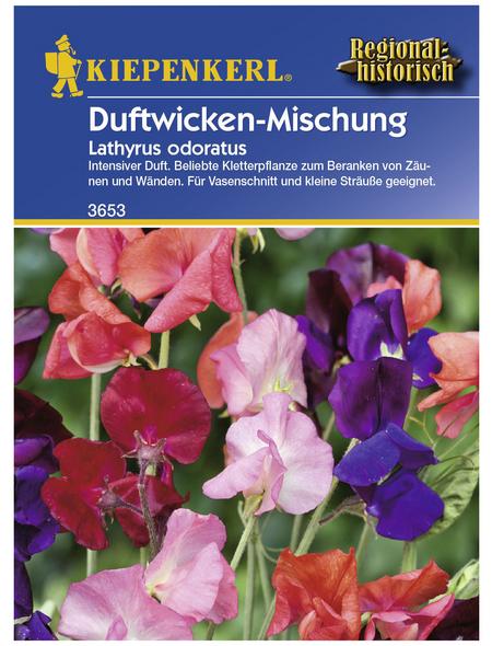 KIEPENKERL Duftwicken, Lathyrus odoratus, Samen, Blüte: mehrfarbig