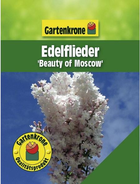 GARTENKRONE Edelflieder, Syringa vulgaris »Beauty of Moscow«, rosa/pink, winterhart