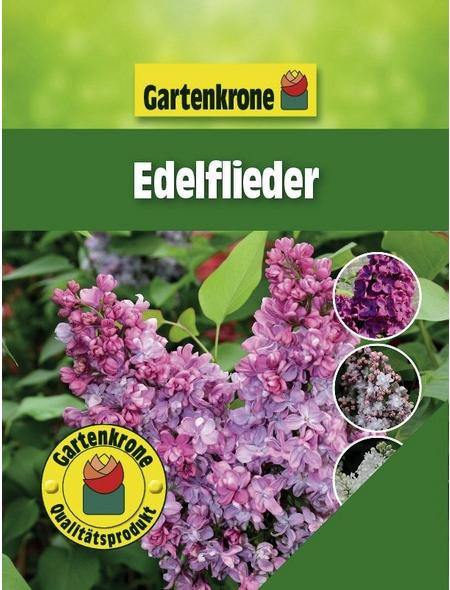 GARTENKRONE Edelflieder, Syringa vulgaris »in Sorten«, bunt, winterhart