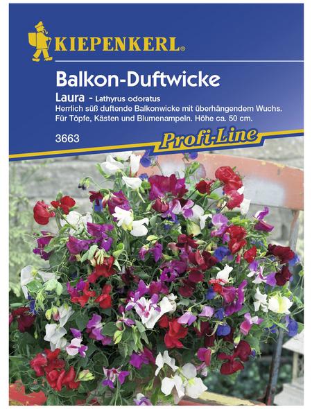 KIEPENKERL Edelwicken, Lathyrus odoratus, Samen, Blüte: mehrfarbig