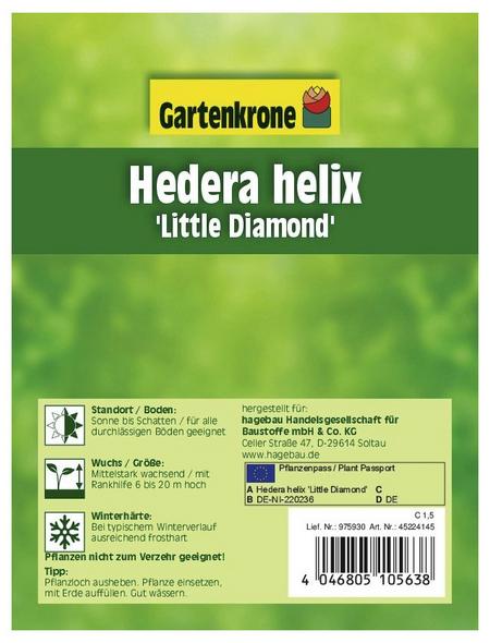 GARTENKRONE Efeu, Hedera helix »Little Diamond«, winterhart
