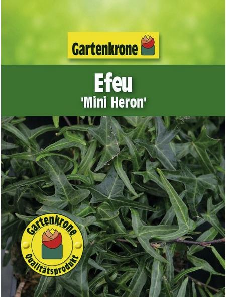 GARTENKRONE Efeu, Hedera helix »Mini Heron«, winterhart