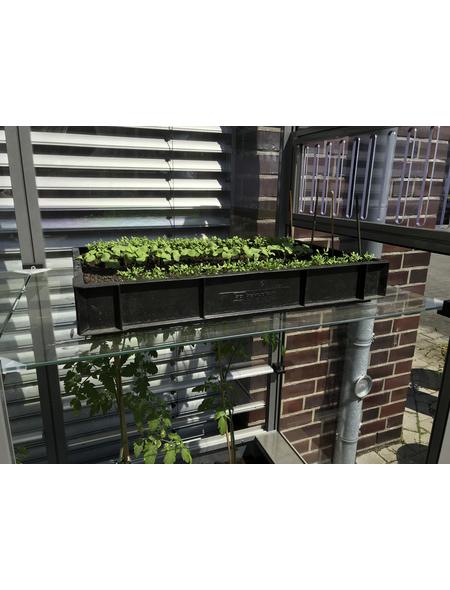 KGT Einlegeböden für Gewächshäuser »Florence«, BxH: 83 x 0,4 cm, Sicherheitsglas