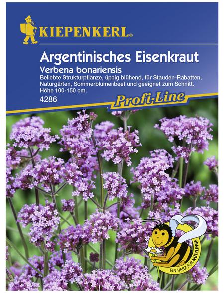 KIEPENKERL Eisenkraut, Verbena bonariensis, Samen, Blüte: helllila