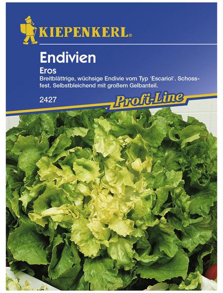 KIEPENKERL Endivien endivia Chicorium