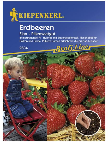 KIEPENKERL Erdbeere ananassa Fragaria »Elan«