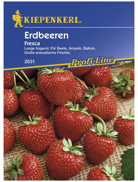 KIEPENKERL Erdbeere ananassa Fragaria »Fresca«