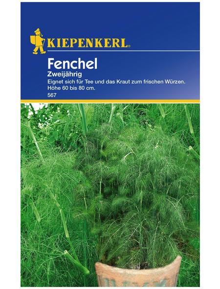 KIEPENKERL Fenchel Foeniculum vulgare