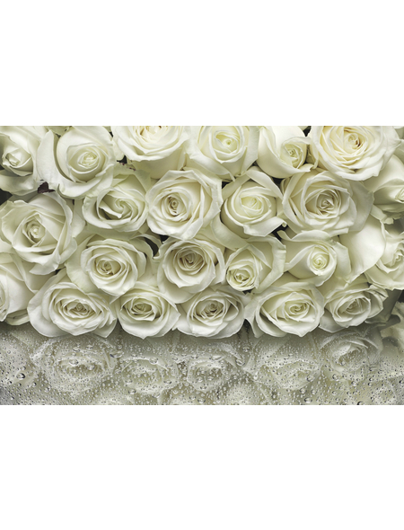 KOMAR Foto-Papiertapete »A la Rose«, Breite 368 cm, inkl. Kleister