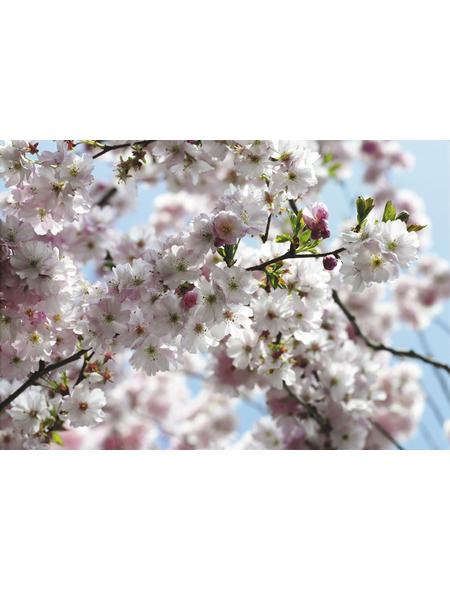 KOMAR Foto-Papiertapete »Spring«, Breite 368 cm, inkl. Kleister