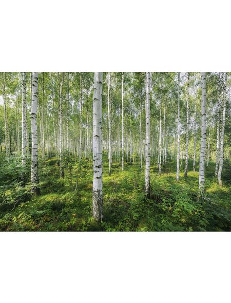 KOMAR Foto-Papiertapete »Sunny Day«, Breite 368 cm, inkl. Kleister