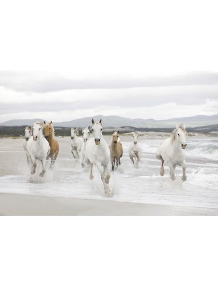 KOMAR Foto-Papiertapete »White Horses«, Breite 368 cm, inkl. Kleister
