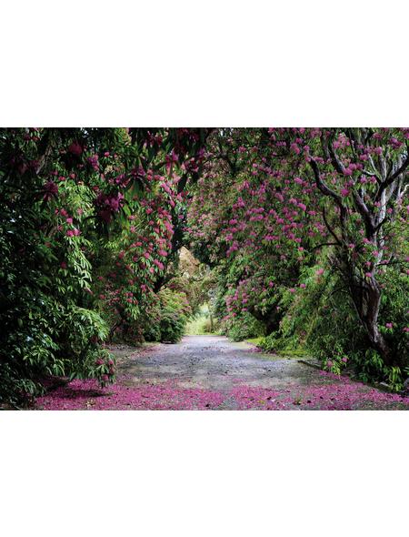 KOMAR Foto-Papiertapete »Wicklow Park«, Breite 368 cm, inkl. Kleister