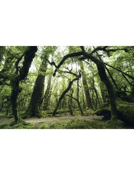 KOMAR Foto-Vliestapete »Ancient Green «, Breite 450 cm, seidenmatt