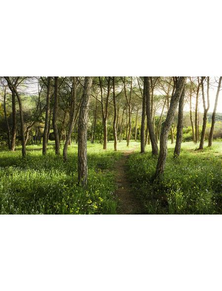 KOMAR Foto-Vliestapete »Blütenzauberwald«, Breite 450 cm, seidenmatt
