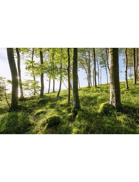 KOMAR Foto-Vliestapete »Buchenspektakel«, Breite 450 cm, seidenmatt
