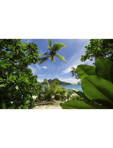 KOMAR Foto-Vliestapete »Cast Away Jungle «, Breite 450 cm, seidenmatt