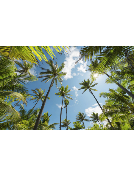 KOMAR Foto-Vliestapete »Coconut Heaven «, Breite 450 cm, seidenmatt
