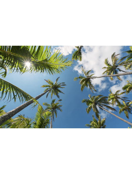 KOMAR Foto-Vliestapete »Coconut Heaven II «, Breite 450 cm, seidenmatt