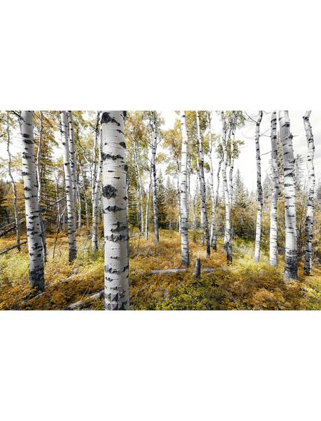 KOMAR Foto-Vliestapete »Colorful Aspenwoods«, Breite 450 cm, seidenmatt