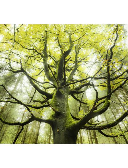 KOMAR Foto-Vliestapete »Der Traumbaum«, Breite 300 cm, seidenmatt