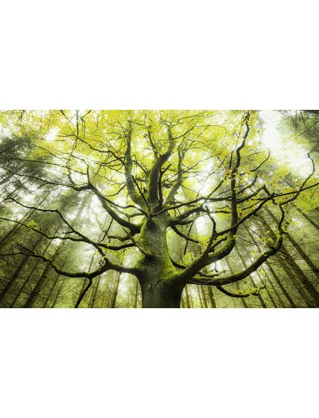 KOMAR Foto-Vliestapete »Der Traumbaum«, Breite 450 cm, seidenmatt