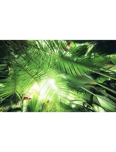 KOMAR Foto-Vliestapete »Dschungeldach«, Breite 450 cm, seidenmatt