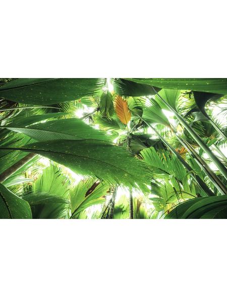 KOMAR Foto-Vliestapete »Dschungeldach II«, Breite 450 cm, seidenmatt