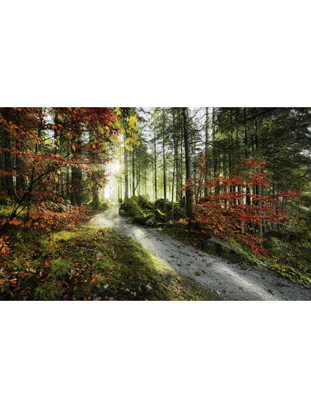 KOMAR Foto-Vliestapete »Feuerzungen«, Breite 450 cm, seidenmatt