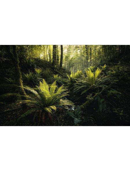 KOMAR Foto-Vliestapete »Fjordland Woods «, Breite 450 cm, seidenmatt