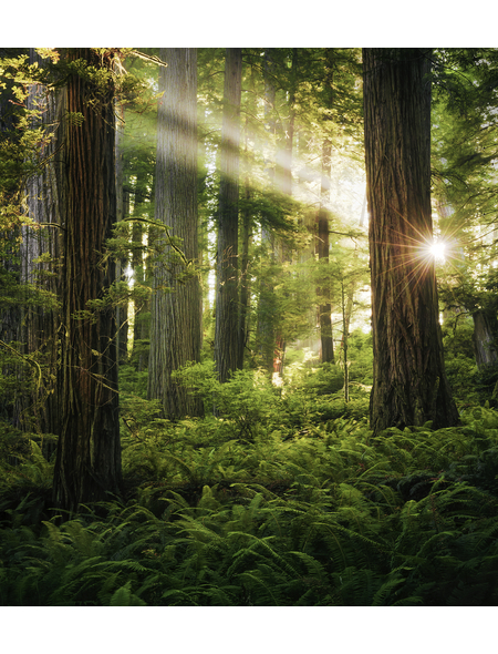 KOMAR Foto-Vliestapete »Goblins Woods«, Breite 250 cm, seidenmatt