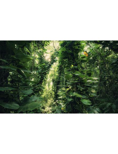 KOMAR Foto-Vliestapete »Green Leaves «, Breite 450 cm, seidenmatt