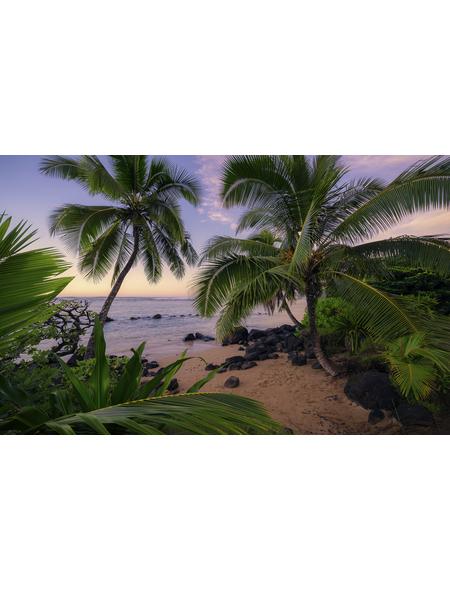 KOMAR Foto-Vliestapete »Hawaiian Dreams «, Breite 450 cm, seidenmatt