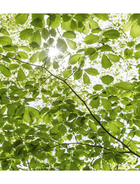 KOMAR Foto-Vliestapete »Im Frühlingswald«, Breite 250 cm, seidenmatt