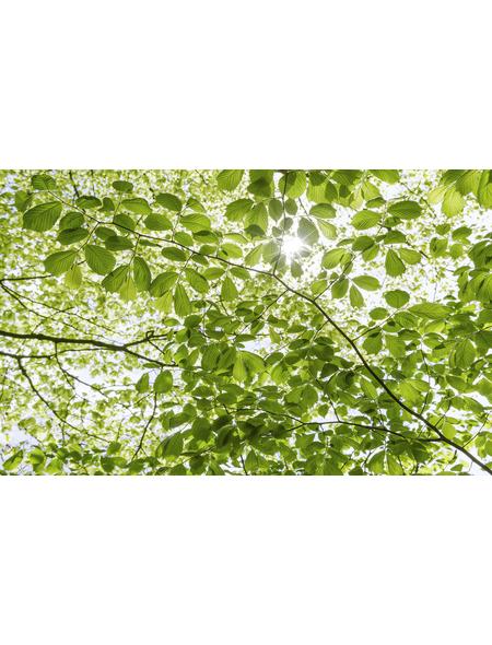 KOMAR Foto-Vliestapete »Im Frühlingswald«, Breite 450 cm, seidenmatt