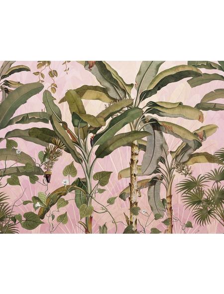 KOMAR Foto-Vliestapete »Plantation«, Breite 350 cm, seidenmatt