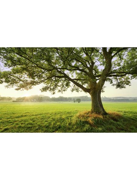 KOMAR Foto-Vliestapete »The Magic Tree«, Breite 450 cm, seidenmatt