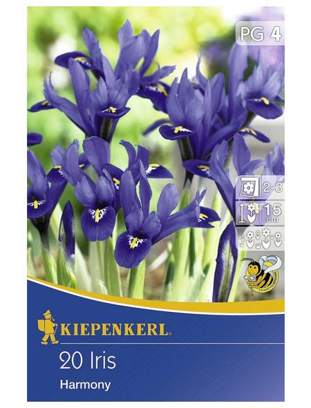 KIEPENKERL Frühlingsiris reticulata Iris