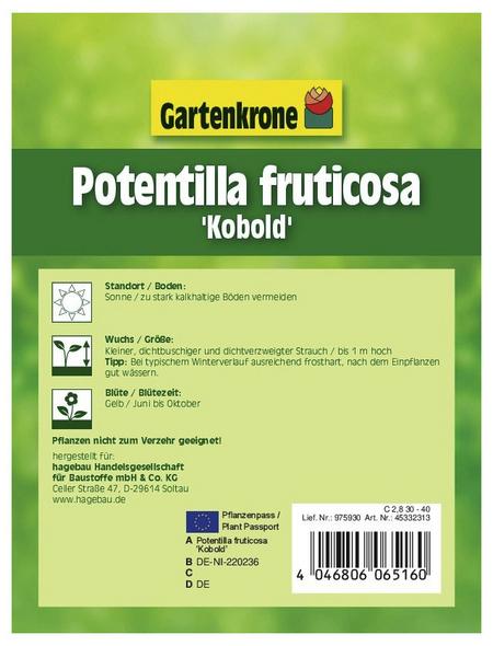 GARTENKRONE Fünffingerstrauch, Potentilla fruticosa »Kobold«, gelb, winterhart