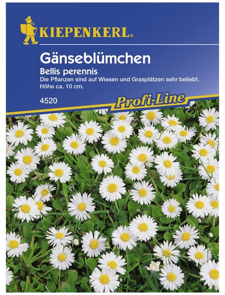 KIEPENKERL Gänseblümchen, Bellis perennis, Samen, Blüte: weiß