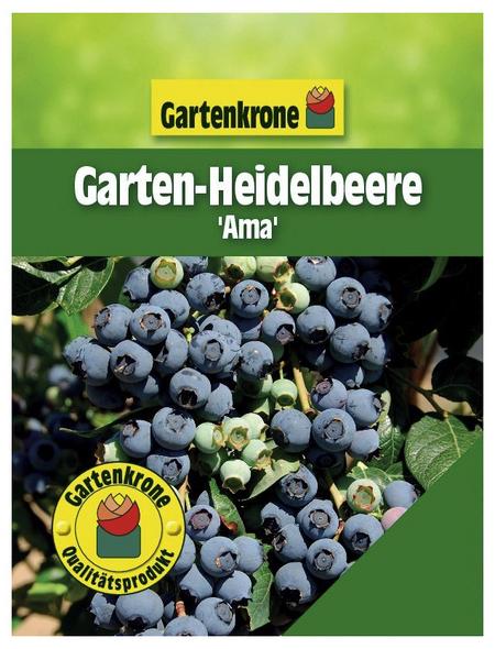 GARTENKRONE Garten-Heidelbeere Vaccinium corymbosum »Ama«