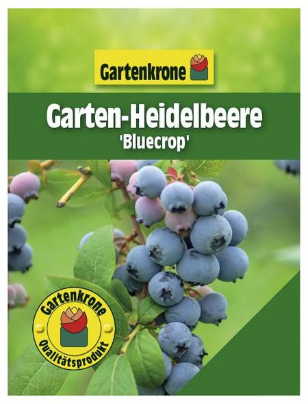 GARTENKRONE Garten-Heidelbeere Vaccinium corymbosum »Bluecrop«