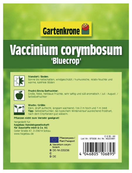 GARTENKRONE Garten-Heidelbeere, Vaccinium corymbosum »Bluecrop«, Früchte: blau, essbar