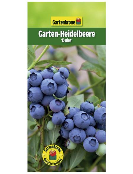 GARTENKRONE Garten-Heidelbeere Vaccinium corymbosum »Duke«