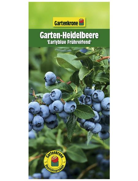 GARTENKRONE Garten-Heidelbeere Vaccinium corymbosum »Earlyblue«